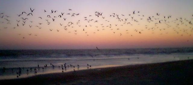 Fågelliv på stranden